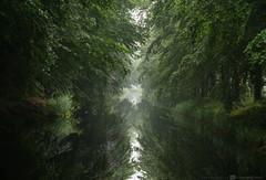 Reflections.... (CarolienCadoni..) Tags: sonyslta99 sal70200g2 70200mmf28gssmii odoornerveen drenthe green trees water reflections reflection foggy