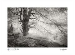 Burnham Beeches (tobchasinglight) Tags: buckinghamshire burnhambeeches chilterns cityoflondon corporationoflondon englishwoodland infrared landscape stokecommon stokepoges woodland ©paulmitchell