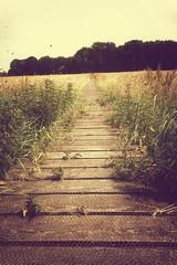 Wooden path (Jos Mecklenfeld) Tags: path pad pfad landscape landschaft landschap hiking wandern wandelen slangenborg sellingen westerwolde groningen netherlands niederlande sonyxperiaz5 xperia
