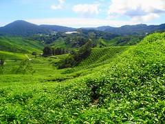 Sudeste Asitico 468 (Grissss) Tags: petronas malaysia kualalumpur cameronhighlands menara teaplantation boh malasia malasya merdaka menaratower paritfalls klccshopingcentre
