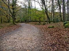 caminode piedras(explore) (sebi510) Tags: españa naturaleza hojas europa arboles camino olympus bosque otoño senda sebi cantabria piedras e510 arbolado otoñal ucieda