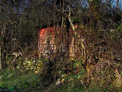 IN THE VINES (lewsviews) Tags: county wood old trip red usa building stone wall america forest virginia us vines woods day country shed hide rappahannock earlywinter