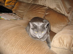 IMG_0246 (shade_everdark) Tags: kitty cinder dadvisit2009 deathfromcute