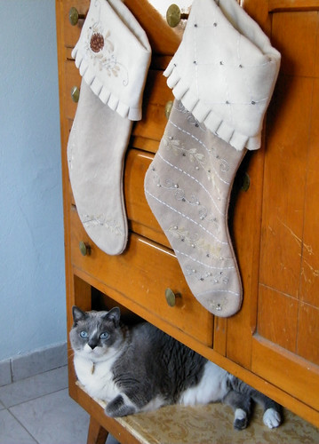 Stockings = Cocoa Approved by katiemetz, on Flickr