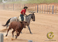 IMG_6185 (Edu Rickes) Tags: brazil horses brasil caballos rodeo cavalos rs riograndedosul gaúchos gaúchas beautifulshots piratini gineteada canon450d brazilianphotographers fotógrafosbrasileiros tirodelaço todososdireitosreservados fotógrafosgaúchos culturagaúcha edurickes belasimagens rodeiogaucho edurickesproduçõesfotográficas canonrebeldigitaleosxsi copyright©2010 fotografiaslegais