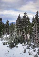 Christmas Trees (janusz l) Tags: christmas eve trees sunset mountain snow ski tree vancouver geotagged hill polish mount seymour slope wigilia janusz leszczynski geo:lat=49365188 geo:lon=122949243 012557