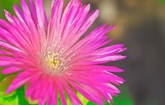 Think Pinky -     (Aziz J.Hayat   ) Tags: pink love canon d50 magazine think pinky micro kuwait aziz hayat q8     50d        abwab   jhayat