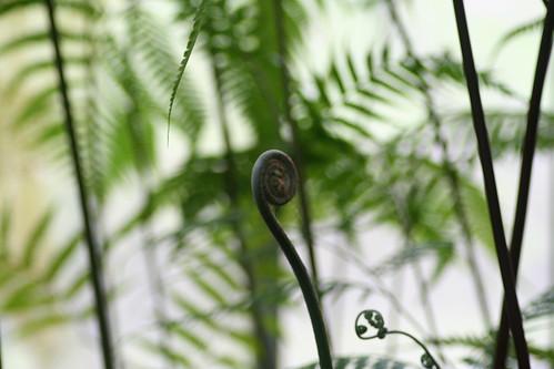 20090919 Edinburgh 20 Royal Botanic Garden 221