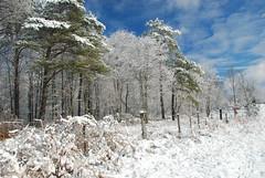 Ohio Winter Snowscape (thoeflich) Tags: winter ohio snow landscape marietta snowfall snowscape