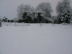 Tring allotment fringe in the snow (Jamie Arnold) Tags: snow allotment tring tringallotmentfringeorguk