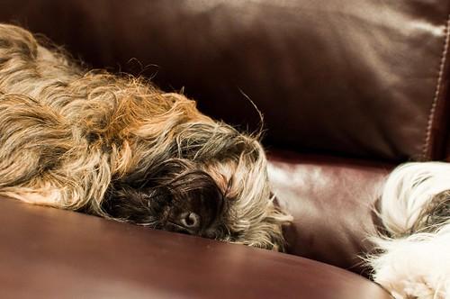 Sleepy Kubrick - 2009