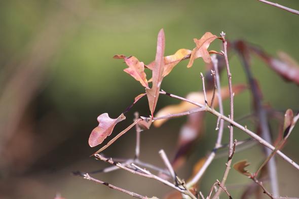 123109_leaves