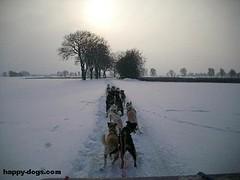 Schlittenhunde-Training Januar 2010