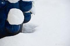 In the frozen blue garden.... (Lee Rudd Photography) Tags: blue snow garden pick