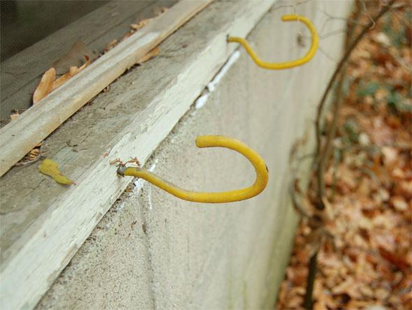 yellow hooks