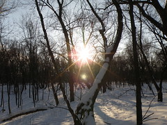 Sun & Trees (crossn81) Tags: snow fortsnelling pikeisland