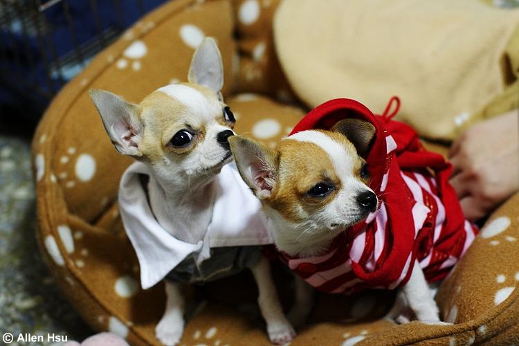 Dog - Bolong & Bonjour