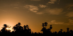 M'Hamid, Morocco (pas le matin) Tags: sunset sky orange cloud sun sahara silhouette clouds soleil desert silhouettes dry palm palmtrees ciel morocco palmtree maroc sec nuage nuages palmiers palmier coucherdesoleil palmeraie palmgrove mhamid deserttree arbredesert desertarbre