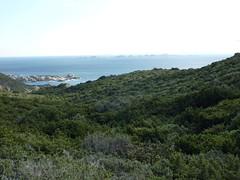 Essai de descente à la Cala di Labra : sentier impraticable (multiples traces, marche sur branches, ...)