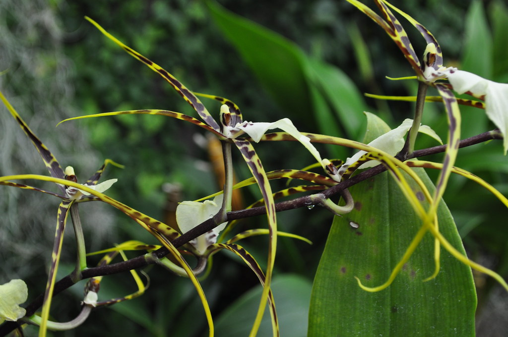 Kaplan Orchid Conservatory (15)
