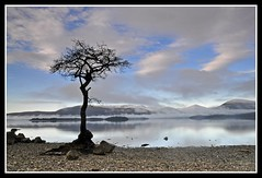 milarrochy tree (Alan...Fraser) Tags: winter snow tree bay scotland loch lomond milarrochy itsfraz