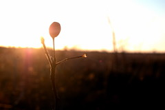 and then, i wonder who i am. (electrocute.) Tags: sunlight plant look that one this is photo please bokeh think like an odd flare there but another something comments aswell