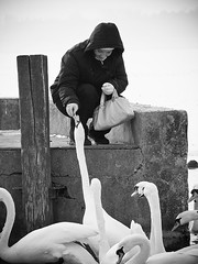 (mayloka) Tags: winter bw swan dock women hungary feeding feed ff hatty etet tska keszthely tl n stg ml anawesomeshot etets