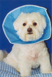 Trimline Recovery Collar