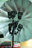 Six Flashes: Proof of Concept (budrowilson) Tags: canon vivitar plm 285 1755 quantaray 50d 285hv strobist paulcbuff qdc900wa paraboliclightmodifier pz1dsz sixflashes