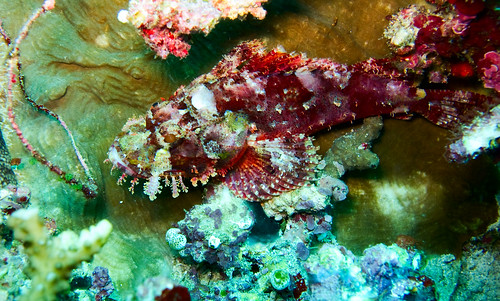 Bunaken Underwater 16