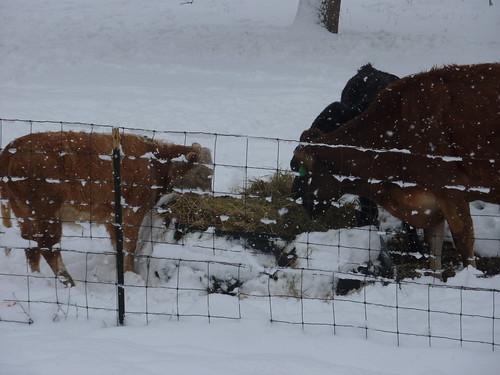 Snow Feeder