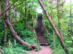 Stairway (++Rob++) Tags: netherlands dunes nederland staircase duinen trap heemskerk noordhollandsduinreservaat
