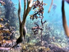 Underwater 1/3