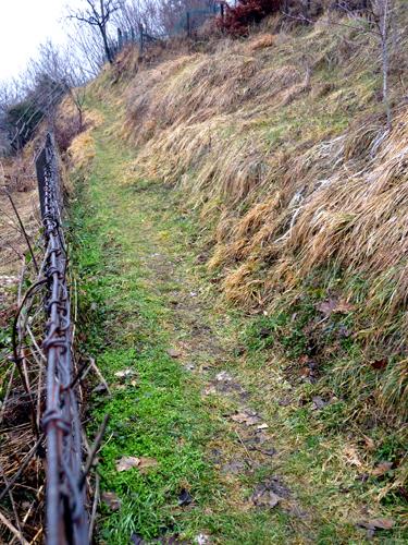 un sentiero tra i campi...