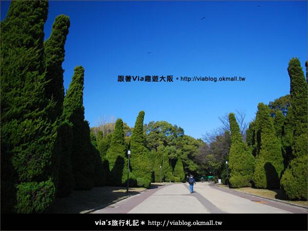 【via關西冬遊記】大阪城天守閣!冬季限定:梅園梅花盛開2
