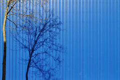 (Heidelknips) Tags: blue shadow sun tree ikea lines wall minimal isolated d90
