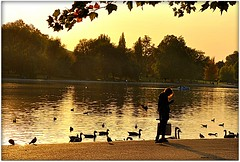 Solitude shows us what should be, society shows us what we are. (TaMiMi Q8) Tags: park uk england people lake london silhouette swan solitude gb hydepark kuwait q8 tamimi