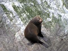Seal Showoff