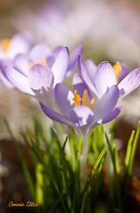 My friend shared her spring garden..