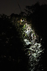 030310 - day 3 - night safari singapore zoo (96) (nate.cho) Tags: zoo singapore singaporezoo nightsafari