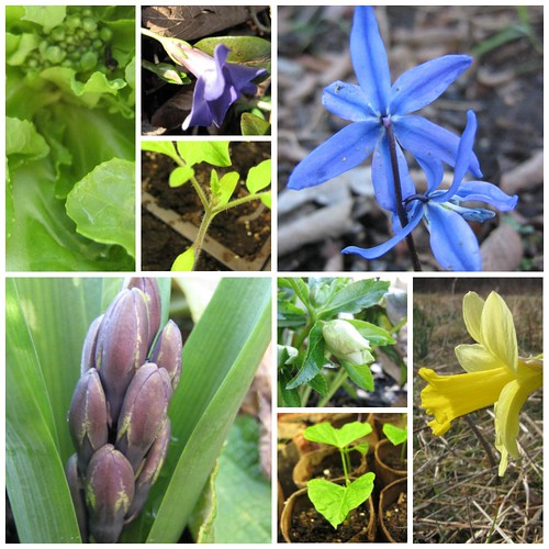 first blooms collage