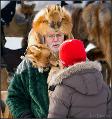 Foxy man at winter market (Jom Manilat) Tags: winter sweden lappland lapland fox foxes aficionados wintermarket arjeplog