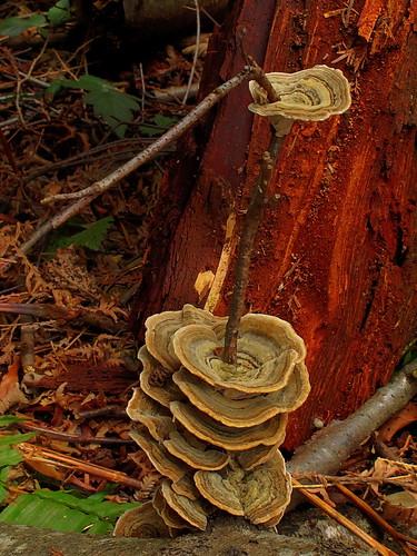 Fungi on a stick