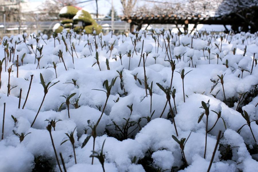 Snow(1)