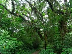 RIMG5979x1000 (Weltbummler) Tags: yerbabuena tucumn bosquenublado nuboselva