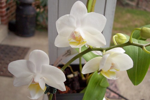 phal timothy christopher