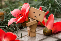 Give me a hand please! (Ali Tse) Tags: flower toy toys amazon withered limited  cottontree danbo bombaxceiba revoltech jfigure danboard  woodcotton