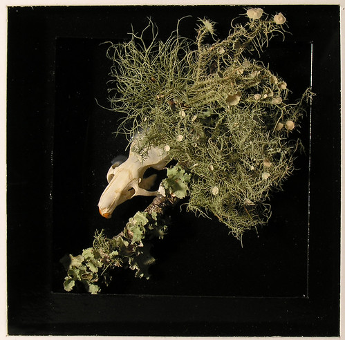 Upcycled Memento Mori Shadow Box 1 Macro - Real Rat Skull, Fungi, and Moss