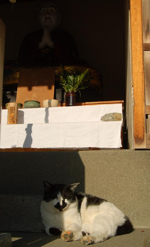 _cat_and_Buddha_