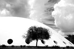 Black & White II (flavita.valsani) Tags: park sky bw tree clouds sopaulo sampa rvore oca parquedoibirapuera valsani